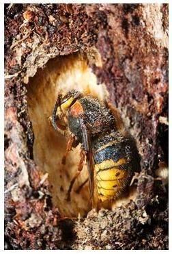 Где зимуют осы, спят ли насекомые в холодный период года? где и как зимуют осы испытание живучести клещей при действии различных факторов