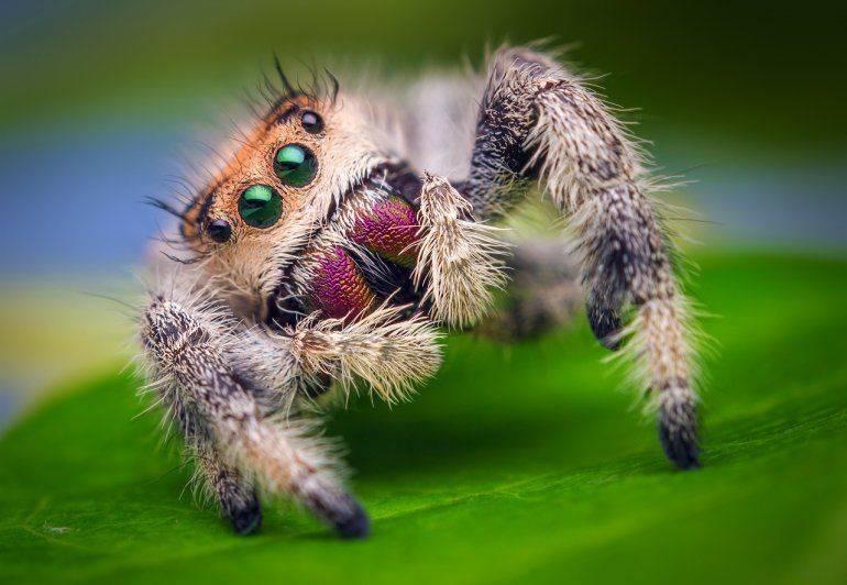 Топ-10 самых красивых пауков в мире