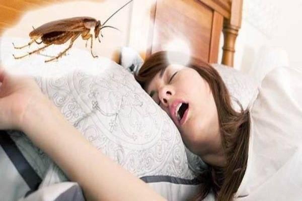 К чему снятся тараканы: большие, живые прусаки в доме, убивать тараканов во сне
