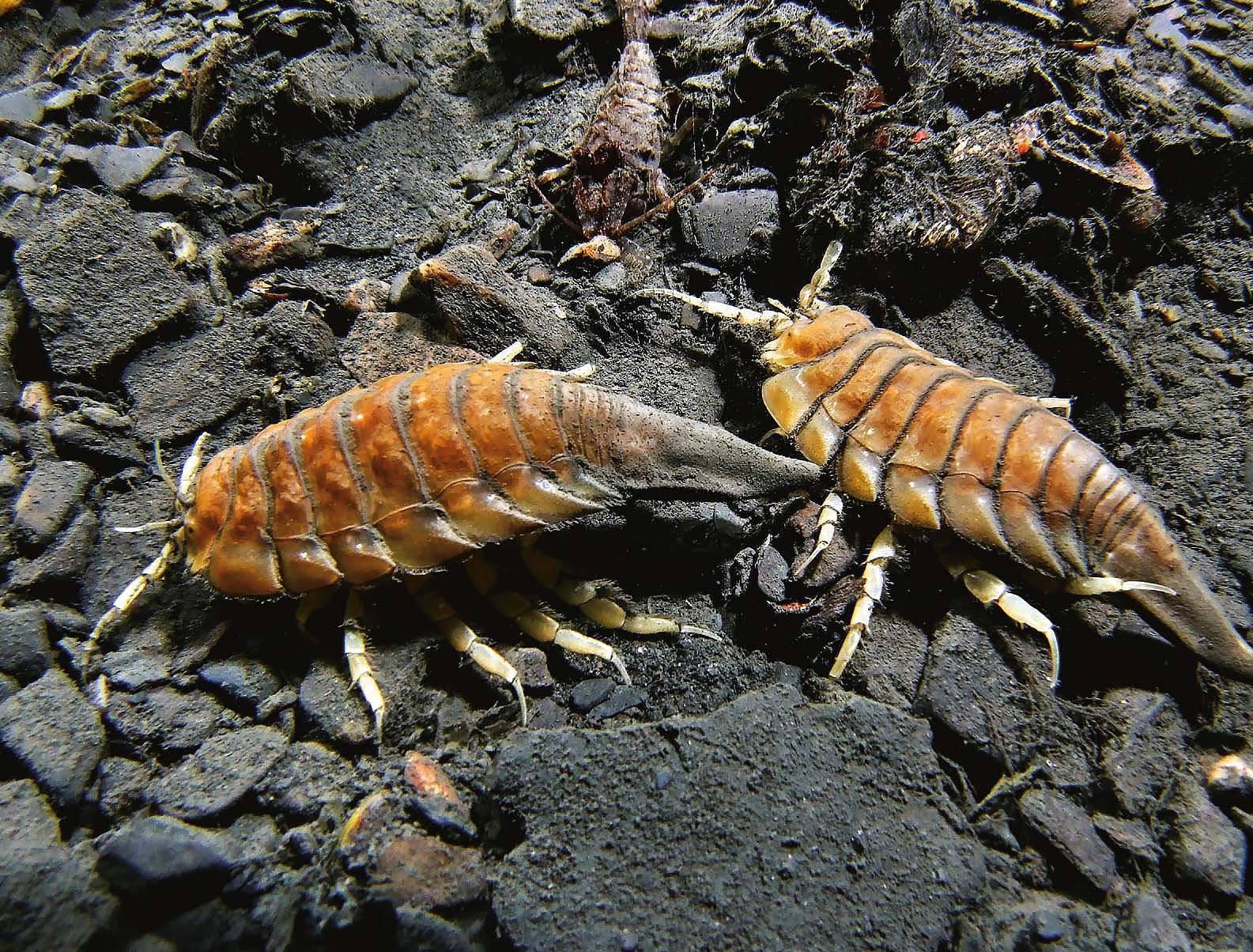 Почём «морские тараканы»? :) 10 вещей, отношение к которым кардинально изменилось за последние 100 лет! ))
