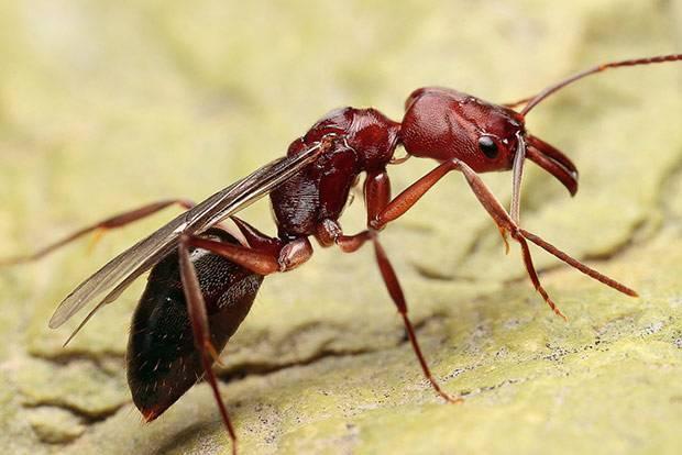 Садовые муравьи: причины появления и способы борьбы c муравьями на участке