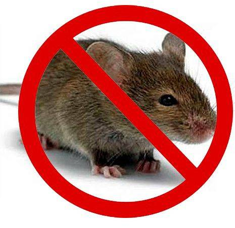 Избавляемся от крыс в курятнике