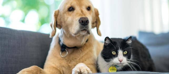 Клещ у собаки (пироплазмоз). лечение, симптомы и первая помощь