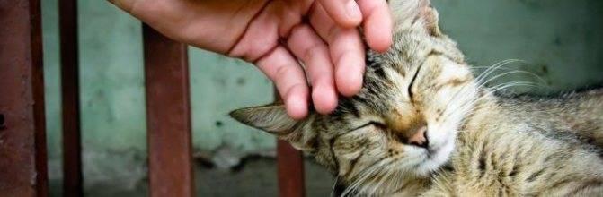 Передаются ли глисты от кошек человеку?