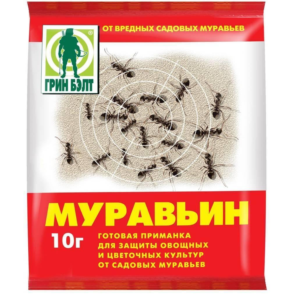 Как вывести рыжих муравьев из квартиры