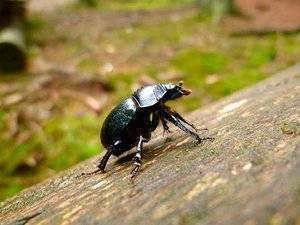 «жук к чему снится во сне? если видишь во сне жук, что значит?»