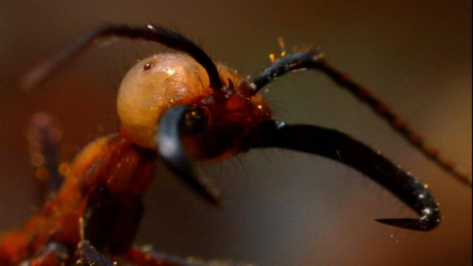 Самые опасные муравьи в мире — опасность для человека и где они обитают!