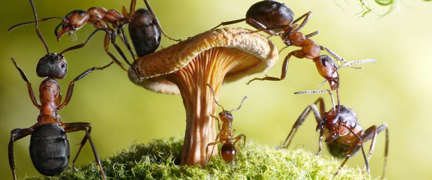 Продолжительность и стадии жизни муравьев
