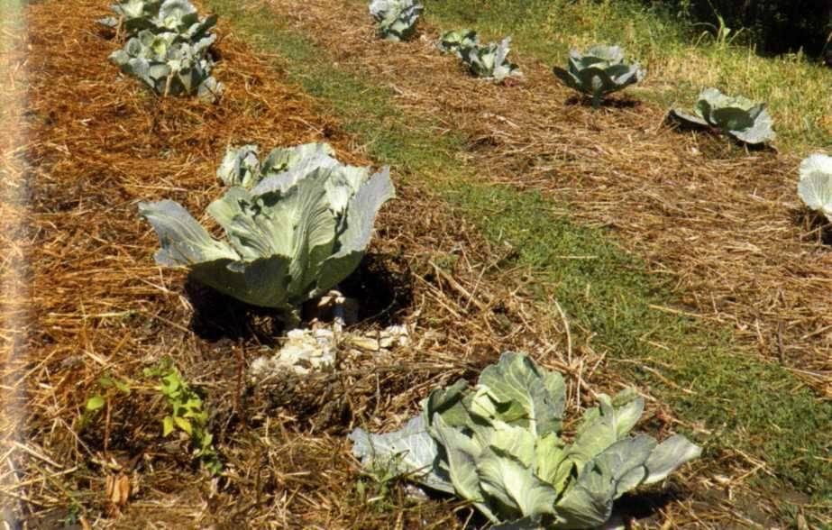 Как избавиться от проволочника в огороде народными средствами навсегда
