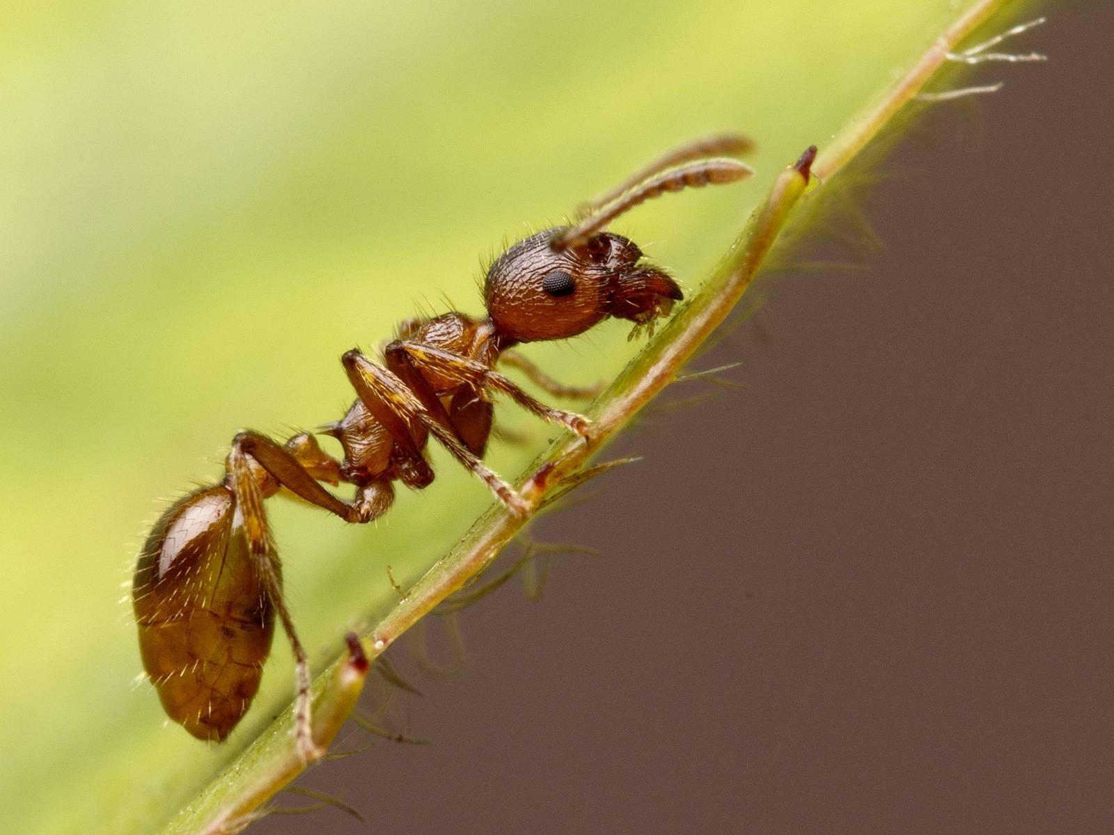 Всё про муравьев