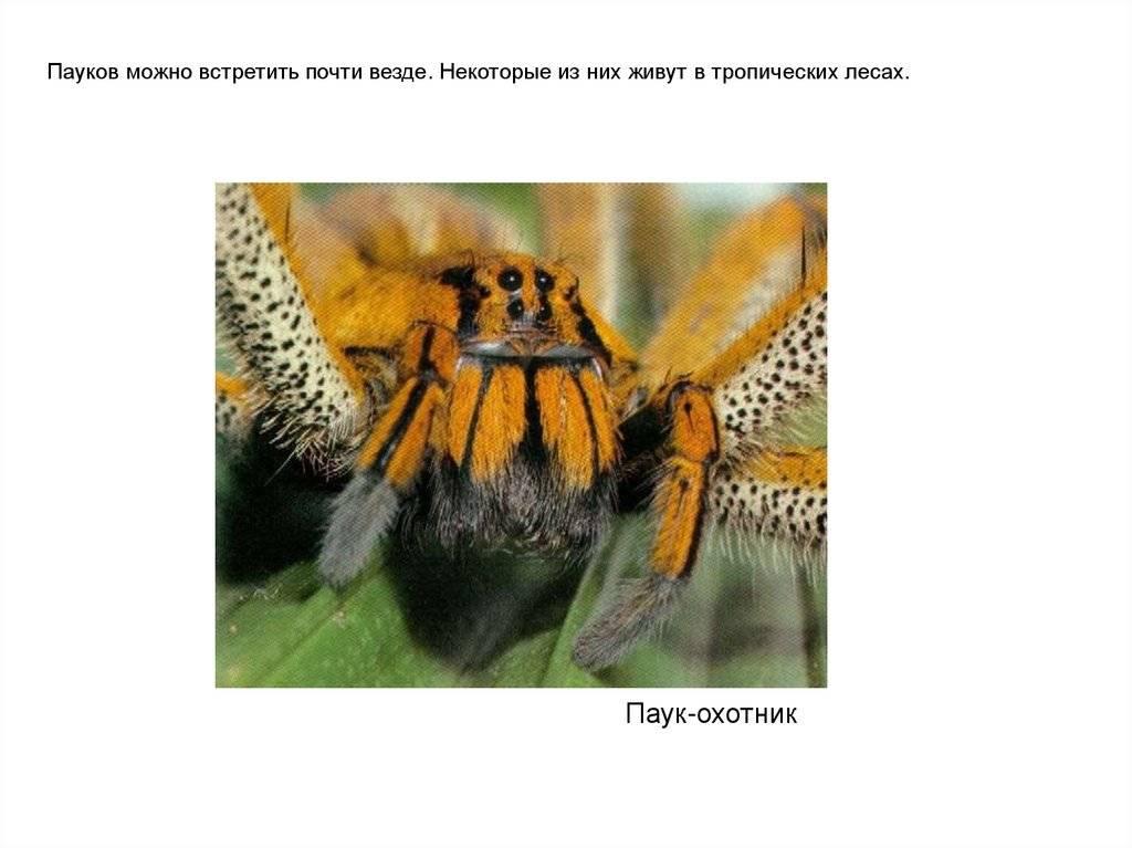 Паук — это насекомое или отдельный класс животных? основные отличия и признаки