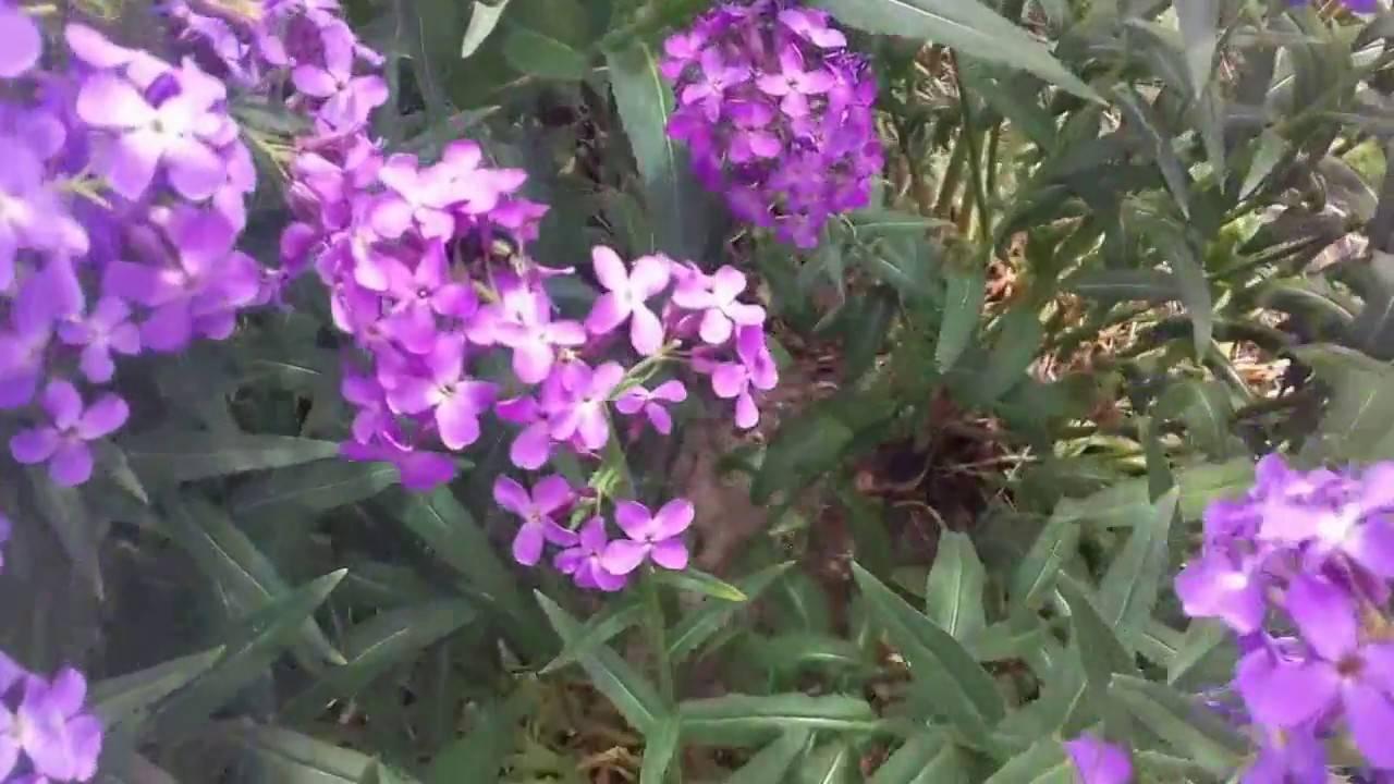 Ощупник— таинственный обитатель муравьиных гнезд