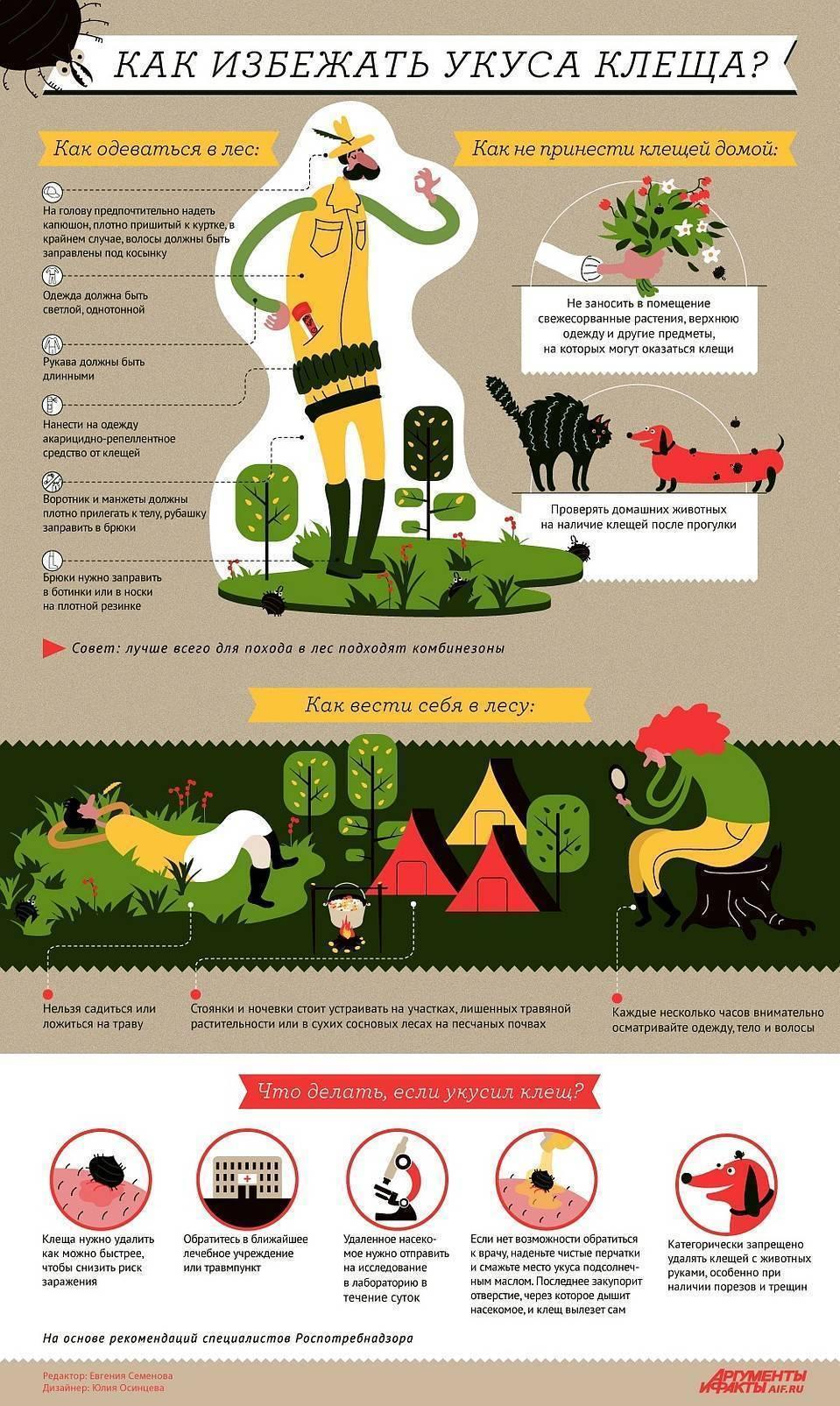 Сколько живёт клещ в природе и квартире, без еды и на теле человека, в одежде и плохую погоду в лесу