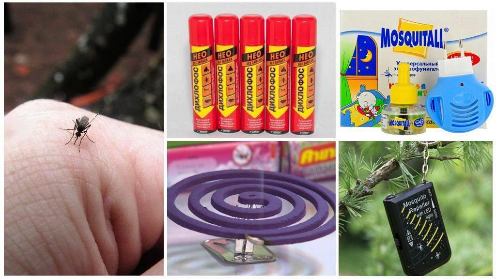 10 лучших народных средств от комаров и других насекомых