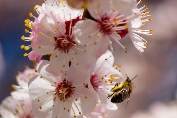 10 катастрофических последствий от исчезновения пчел на земле