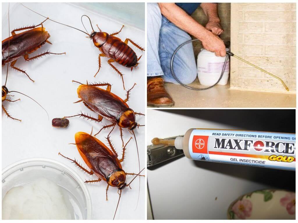 Препарат «регент» от тараканов: описание, инструкция, отзывы покупателей