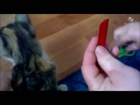 Насколько эффективны и как работают капли от блох и клещей для собак