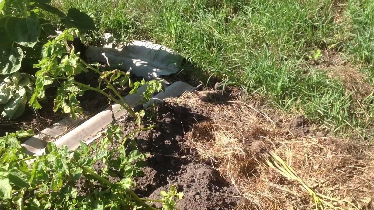 Березовый деготь: применение в саду и огороде
