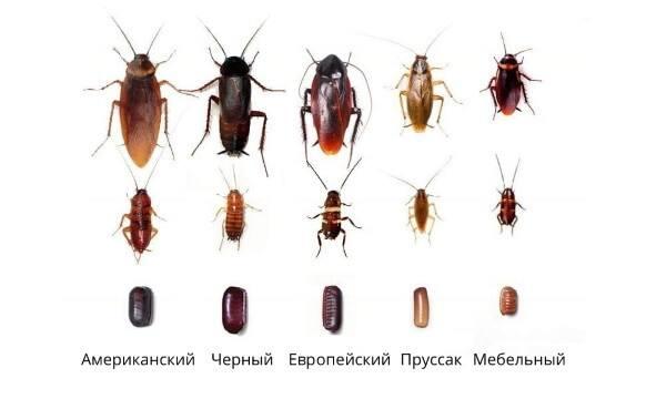 Про «дезинфекцию» от тараканов и важные правила ее проведения в квартире