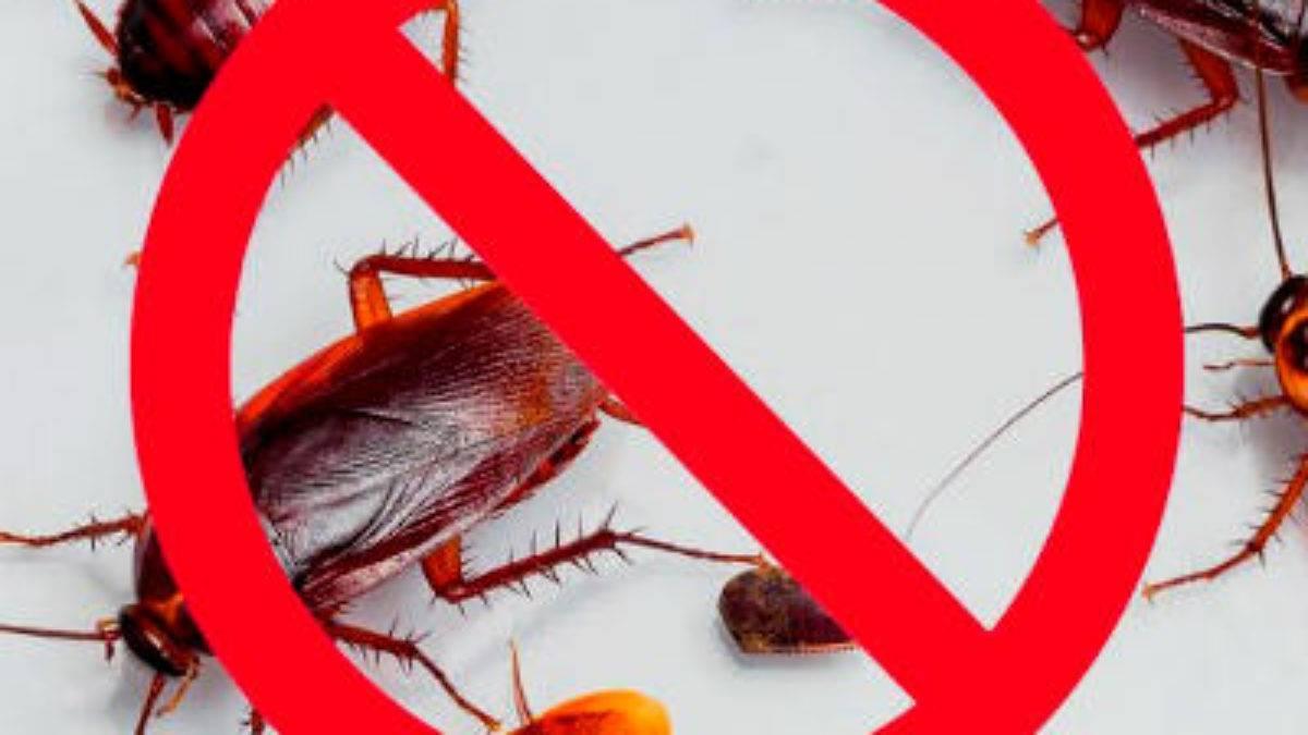 Как избавиться от рыжего таракана в квартире эффективные средства, инструкция по применению