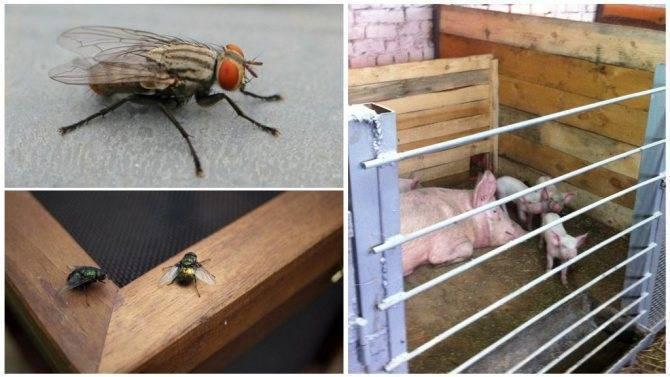Как избавиться от мух в сарае
