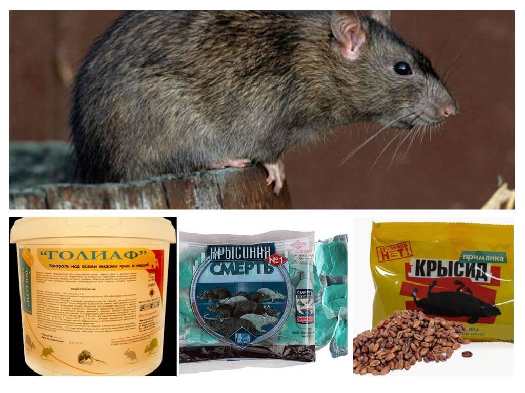 Какое средство от крыс и мышей считается самым эффективным