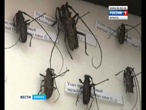 Как избавиться от жука-усача