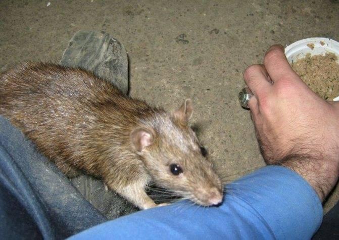 Предполагаемый укус мыши