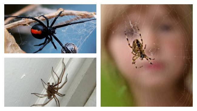 Непрошеные гости: к чему появляются в доме черные пауки и как от них избавиться?