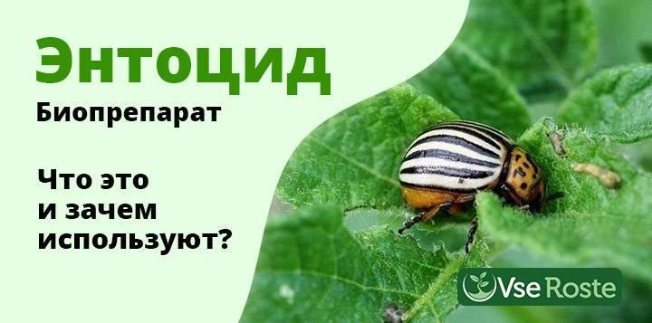 Тля в саду и огороде – как избавиться от вредителя быстро и без хлопот