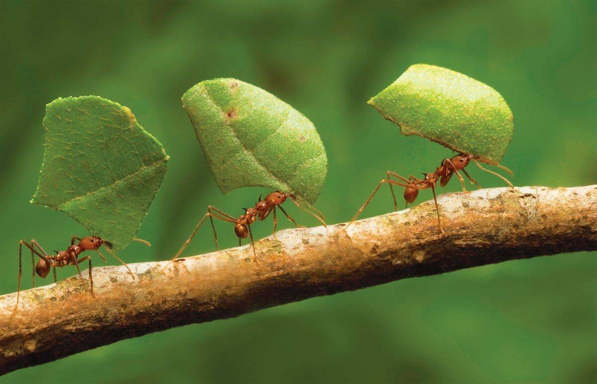 От чего чаще всего появляются в квартире муравьи