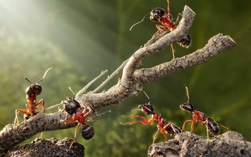 Что делают муравьи зимой?