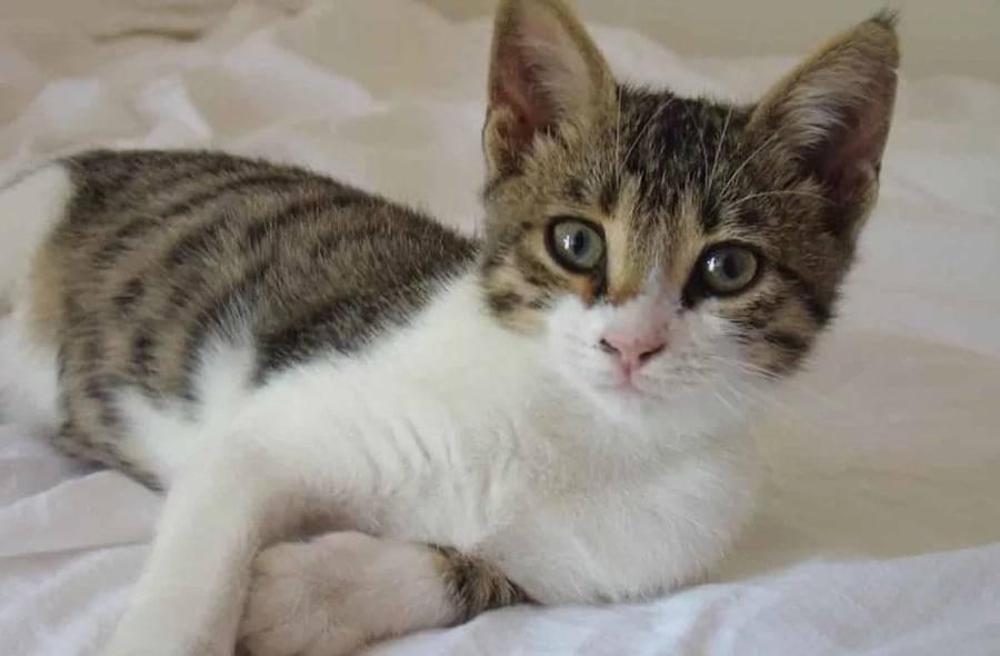 Выводим блох у кошки народными средствами в домашних условиях: избавляемся от блох у кота полностью