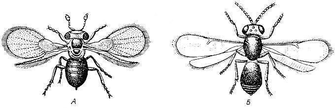 Как бороться с мучнистым червецом на комнатных растениях: причины появления, профилактика и народные средства