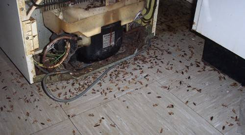Виды отравы от тараканов