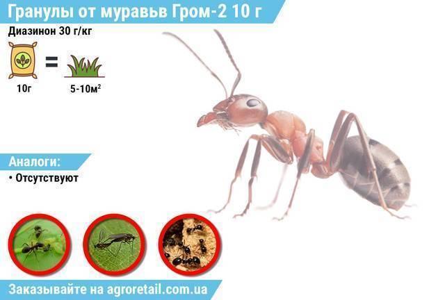 Гром 2 от муравьев