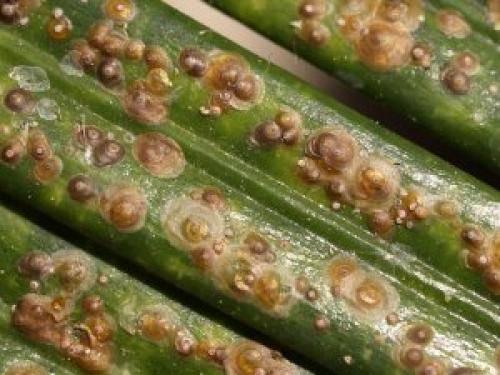 Бич комнатных растений – щитовка. фото вредителя и советы, как с ним бороться