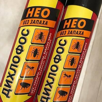 Самое эффективное средство от тараканов: аэрозоли, гели — что выбрать?