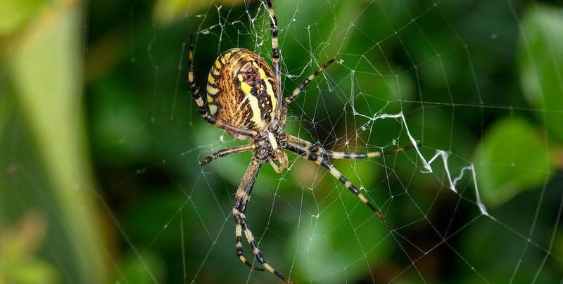 Укусил паук: что делать?