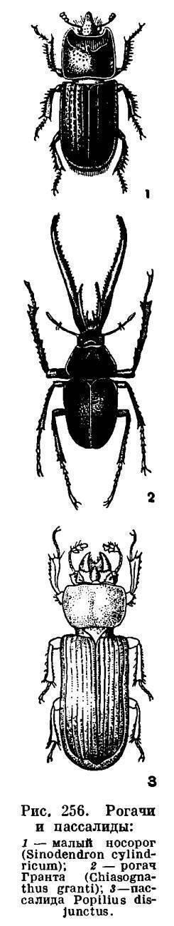 Друзья-насекомые - п. мариковский - страница 6