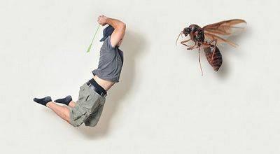 Эффективные магазинные и народные средства против домашних мух