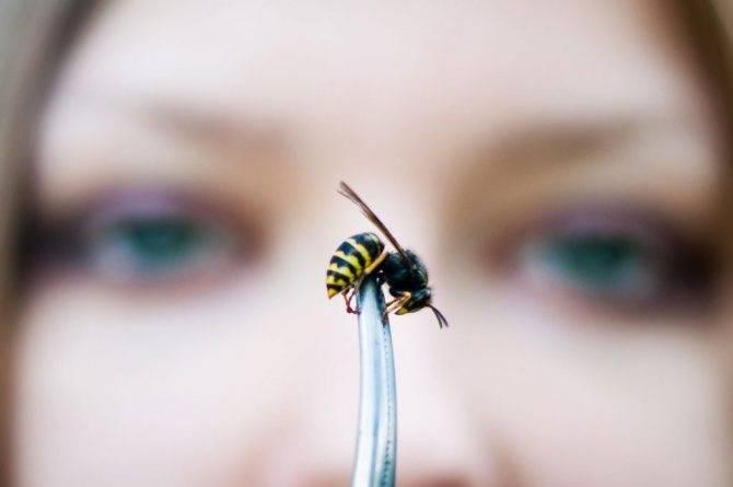 Почему мухи садятся на людей: причиниы назойливости и опасность