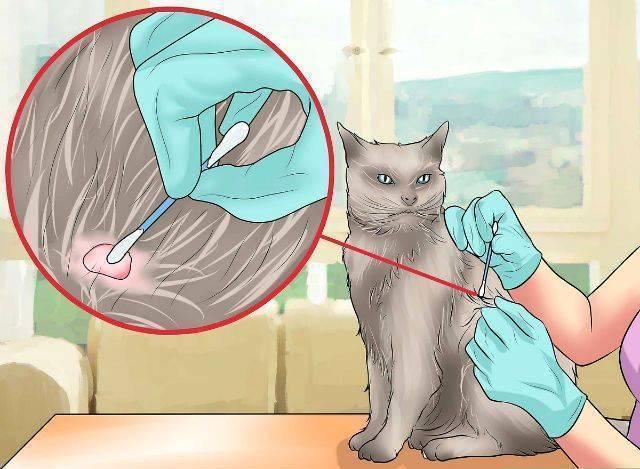 Как удалить клеща у кошки или кота