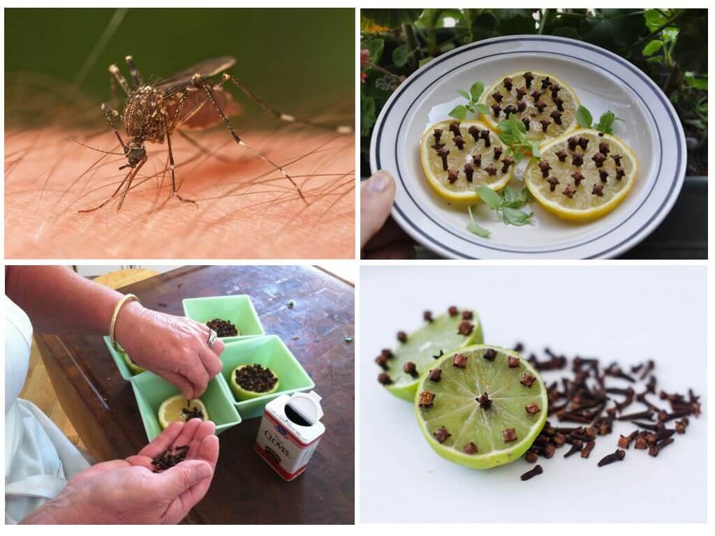 Лимон с гвоздикой от комаров и клещей – рецепт