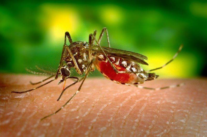 Почему комары одних кусают, а других нет