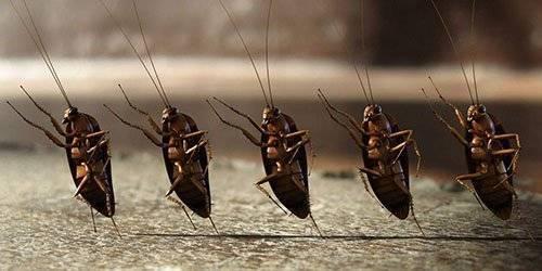 «сонник таракан приснился, к чему снится во сне таракан»