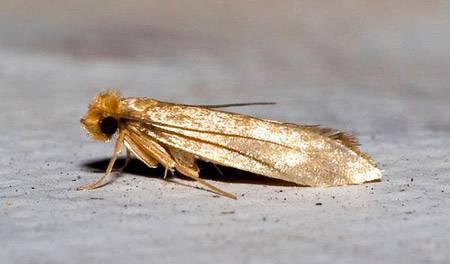 Чего не любят тараканы