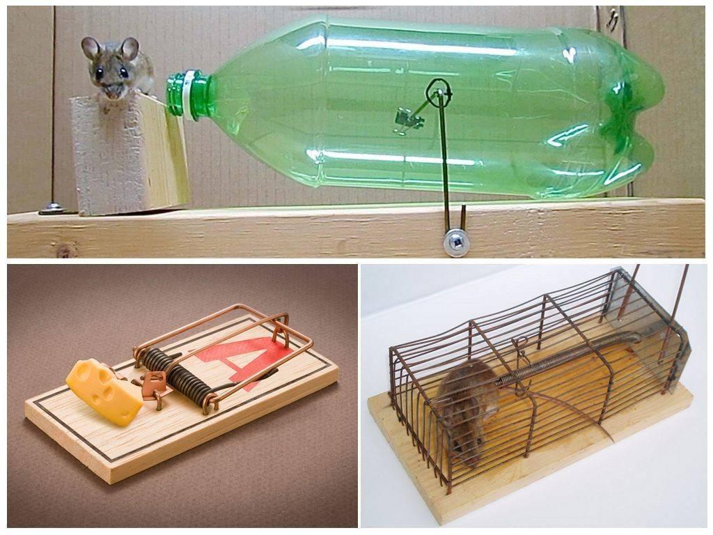 Как вывести грызунов и поймать мышь в доме без мышеловки: гуманные способы борьбы