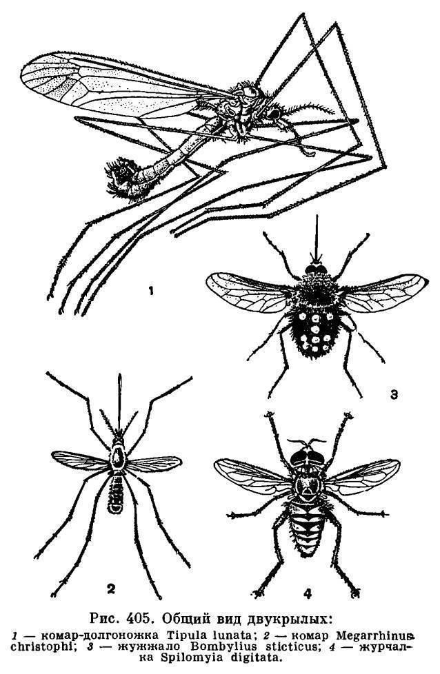 Жигалка муха. образ жизни и среда обитания жигалки