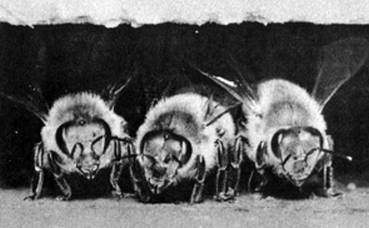 Описание и фото разновидностей комаров